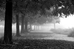 Fog inspires me ... (jaume zamorano) Tags: autumn blackandwhite blancoynegro blackwhite blackandwhitephotography blackandwhitephoto bw boira brouillard d5500 fog foggy ground lleida monochrome monocromo mist nikon noiretblanc nikonistas niebla pov street streetphotography streetphoto streetphotoblackandwhite streetphotograph tufototureto urban urbana absoluteblackandwhite