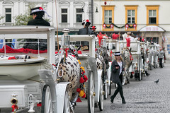 TOURISTS YOUR CARRIAGE AWAITS..... (mark_rutley) Tags: horse poland krakow carriages horseandcart tourist equestrian ladies lady manure