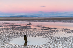 It's Behind You! (Stoates-Findhorn) Tags: 2018 findhorn beltofvenus beach sunrise moray groynes sandpatterns dawn reflections sutherland easterross earthshadow morayfirth backshore scotland