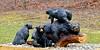 A like a momma bear hugs her baby bear cubs