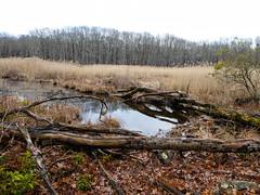 P1030488 (rpealit) Tags: scenery wildlife nature saffin pond mahlon dickerson reservation morris county park jefferson twp beaver dam weldon brook