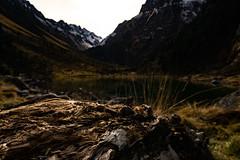 DSC00513 (Sébastien Murail) Tags: wood nature bois montagne vert foret tronc