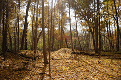 Sunlight and shadow (D. C. Wilson) Tags: park reserve woods trees leaves sunlight shadow autumn fall forest wood tree sky charleston ohio sony