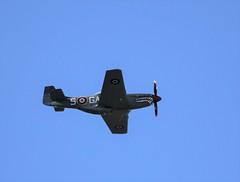 P-51D Mustang G-SHWN (egbjdh) Tags: philkeene october2018 egbj staverton gloucester