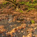 A Woodland Stream thumbnail