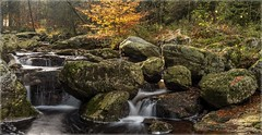 La Hoegne_91491-Pano (uwe_cani) Tags: panasonic g9 outdoor natur nature hohesvenn hautesfagnes highfens ardennen ardennes belgien belgium nationalparkeifel fluss river bach wasser water langzeitbelichtung longtimeexposure filter ndfilter steine stones herbst fall autumn wasserfall waterfall gelb yellow orange grün green hoegne hoëgne