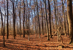 One (*AdeCo*) Tags: herbst autumn wald forest trees bäume farben colors skurril comical germany outside