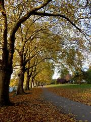 Autumn Walk (jenichesney57) Tags: trees kingston london walk leaves autumn path sky sun thames panasoniclumix