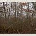 Autumn gets deeper, days shorten ... (Peter Szawlowski) Tags: massachusetts ma capecod capecodnationalseashore vegetation woods provincetown conservationarea bennetpond trees lateautumn beforewinter decay melancholy massachuetts unitedstates usa