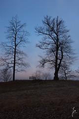 Bench (jannaheli) Tags: suomi finland helsinki laajasalo luonto naturephotography nature luontovalokuvaus luontoterapia naturetherapy talvi winter marraskuu november outdoor outside nikond7200 ulkona maisema landscape bench penkki