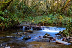 Water Is The Driver Of Nature (CJD imagery) Tags: river autumn canonefs18135mmf3556isstm canoneos80d longexposurephotography longexposure naturephotography nature forestholidays liskeard cornwall deerpark england gb greatbritain uk unitedkingdom