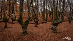 Hayedo de Otzarreta (Anna & Oskar) Tags: esp españa ipiñaburu paisvasco hayedo otoño otzarreta colores rojo marron amarillo rio riachuelo agua montaña parque natural gorbea gorbeia