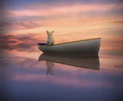fox in a boat RS-7212 (P.E.T. shots) Tags: fox boat photoart fantasy fun