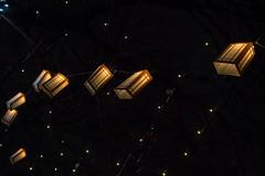 brightlightswindsor2_dec2018 (YenC) Tags: brightlights christmas lights windsor jacksonpark