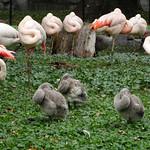 Flamingo Lesson thumbnail
