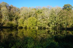Waterloo Pond near Chilworth, Surrey 3 (Leimenide) Tags: chilworth surrey england north downs autumn trees pond lake water reflection landscape nature