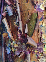 Abstract Appeal (cobalt123) Tags: bark peeling tree iphone8plus baltimore maryland june 2018 abstractfromnature