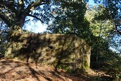 Pillbox on St Martha's Hill, Surrey 2 (Leimenide) Tags: pillbox defence wood britain england autumn world war ii st marthas hill surrey north downs way