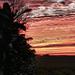 1211-coucher de soleil haie (sebastien.demotier) Tags: haie champlieu orrouy picardie valois france leaf ciel rouge red sky nuages clouds cloud