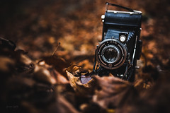 Not exactly natural habitat (Soren Wolf) Tags: adox sport retro camera autumn leaf leafs brown dark nikon d7200 sigma 1835mm beautiful artistic short depth field dof
