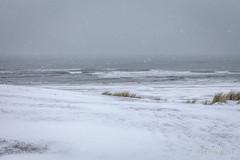 Hoe overleef ik Kijkduin (Pieter Musterd) Tags: sneeuw winter kijkduin strand zee noordzee koud pietermusterd musterd canon pmusterdziggonl nederland holland nl canon5dmarkii canon5d denhaag 'sgravenhage thehague lahaye