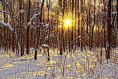 Winter day (prokhorov.victor) Tags: зима природа лес снег пейзаж солнце деревья