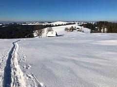 Winter 2019 (Alp Schallenberg Gabelspitz Röthenbach) (Martinus VI) Tags: röthenbach emmental kanton de canton bern berne berna berner bernese schweiz suisse suiza switzerland svizzera swiss y190119 martinus6 martinus6xy martinus martinusvi