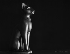 The worship of cats (Elisafox22) Tags: elisafox22 sony ilca77m2 100mmf28 macro macrolens telemacro lens black lifeisarainbow cat figurine egyptian ancientegypt worship catgoddess goddess stilllife elisaliddell©2018