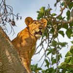 Taken in Uganda thumbnail