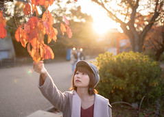 Young woman touching autumn leaves (Apricot Cafe) Tags: ap2a3112 asia beautifulpeople japan japaneseethnicity kyotocity kyotoprefecture maruyamaparkkyoto millennialgeneration sigma35mmf14dghsmart autumn autumnleafcolor backlit beret coat colorimage copyspace elegance gion leaf leisureactivity lensflare lifestyles loneliness lookingup nature oneperson oneyoungwomanonly people photography publicpark relaxation relaxing serenepeople shorthair street sunlight sunset touching tourism travel twilight waistup women youngadult