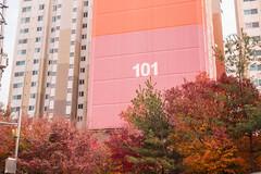 Autumn in Seoul (Gilead Photography) Tags: autumnleaves autumncolours autumnseason colourful leaves colourfulleaves fall korea seoul beauty nature naturephotography travelphotography