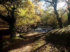 PUENTE OTOÑAL (agustincordoba_g) Tags: otoño paisaje arboles arte agustin ucieda cantabria bosque