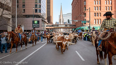 Denver's National Western Stock Show Parade (OJeffrey Photography) Tags: texaslonghorns cowboys cowgirls denver colorado co nationalwesternstockshow parade downtown panorama pano church herd ojeffreyphotography ojeffrey jeffowens nikon d850