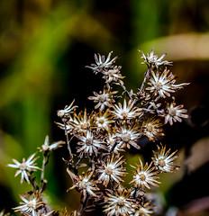 A Special Place. (Omygodtom) Tags: flora outside macro bokeh tamron90mm tamron texture usgs d7000 dof nature natural nikon