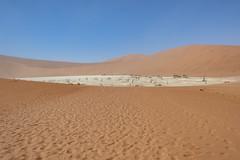_RJS4690 (rjsnyc2) Tags: 2019 africa d850 desert dunes landscape namibia nikon outdoors photography remoteyear richardsilver richardsilverphoto safari sand sanddune travel travelphotographer animal camping nature tent trees wildlife