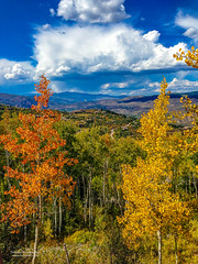 Aspens (Tom Jodis) Tags: aspens colorado fall trees seasons scenic mountains