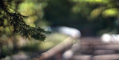 Floating upstairs (PeterThoeny) Tags: saratoga california siliconvalley sanfranciscobay sanfranciscobayarea southbay hakonegardens japanesegarden garden park tree stairs day outdoors bokeh blur dof shallowdof depthoffield shallowdepthoffield sony a7 a7ii a7mii alpha7mii ilce7m2 fullframe vintagelens dreamlens canon50mmf095 canon 1xp raw photomatix hdr qualityhdr qualityhdrphotography fav50
