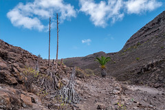 Lavafelder / lava fields (ludwigrudolf232) Tags: palmen euphorbia lava alajeró wandern gomera la