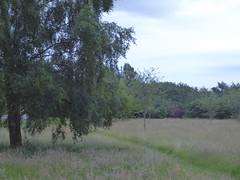 Tall grasses (seikinsou) Tags: amaravati england meditation retreat retreatcentre grass park path birch tree summer midsummer