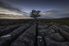 Lone Tree, Langcliffe (Malajusted1) Tags: tree langcliffe settle yorkshiredalesnationalpark yorkshire black silhouette fells limestone cracks sunset dusk blue hour sundown clouds karst lonely remote england mountains isolation alone loneliness dales national park