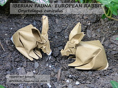 RABBIT (PICARUELO) Tags: hispania rabbit conejo origami papiroflexia