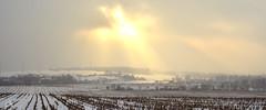 White fields & burning sun rays (ChemiQ81) Tags: polska poland polen polish polsko chemiq польша poljska polonia lengyelországban польща polanya polija lenkija ポーランド pólland pholainn פולין πολωνία pologne puola poola pollando 波兰 полша польшча outdoor landscape krajobraz widok pejzaż chmury clouds zimowy sky snow śnieg winter zima sun wojkowice fog foggy mgła mist field pole