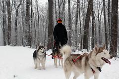 IMG_0056_AutoColor (LifeIsForEnjoying) Tags: snow mushing dog sledding dogs snowboard sled sitka nike kaskae