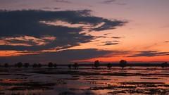 *** (pszcz9) Tags: przyroda nature natura naturaleza nationalpark parknarodowy ujściewarty woda water pejzaż landscape zachódsłońca sunset beautifulearth sony a77