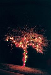 Christmas Lights (dylan67krause) Tags: christmas winter snow film kodak portra 160 vintage analogue vivitar mamiya 50mm 35mm c41