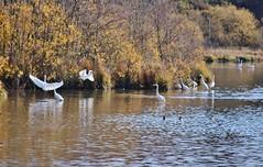 Herons (Hugo von Schreck) Tags: hugovonschreck bird vogel heron reiher tamron28300mmf3563divcpzda010 canoneos5dsr