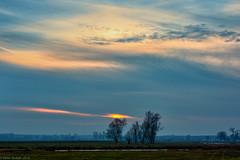 Sky over mazowsze (peterpj) Tags: mlynarze polen sky trees colorefexpro nikon d800 50mm