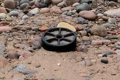 IMG_5045 (monika.carrie) Tags: monikacarrie wildlife scotland aberdeen