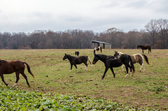 Rachel Carson Conservation, MD 31 (mixedeyes) Tags: autumn horse maryland