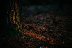 Last Light (reclaimednj) Tags: optoutside nj 2018 bassriverstateforest forest